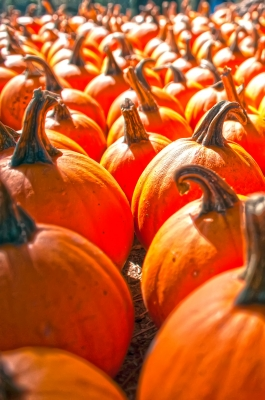 Pick out a jack-worthy Jack O'Lantern!